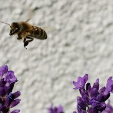Bienen und Bauern nicht gegeneinander ausspielen